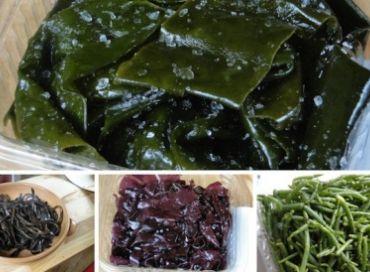 Le secret des algues
