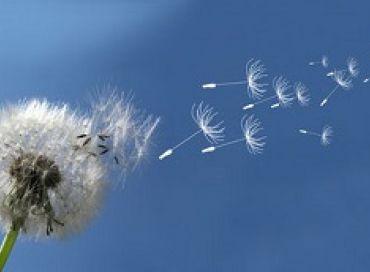 Comment gérer l'allergie aux pollens chez les ados ?