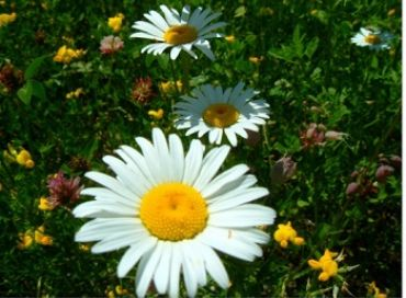 Des remèdes pour lutter contre les limaces et pucerons en avril au jardin