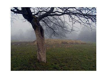 C'est le moment de badigeonner les troncs de vos arbres