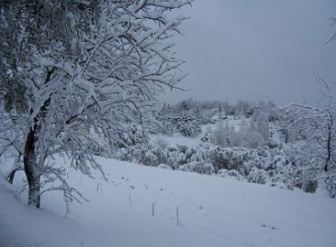 Le mois de janvier en biodynamie dans votre jardin