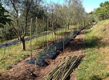 Le joli mois de mai sera biodynamique au jardin