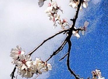 Le mois de mars en biodynamie dans votre jardin