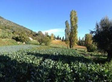 Entretenir son jardin en biodynamie au mois de novembre