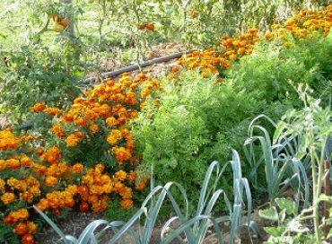 Les travaux d'octobre au jardin en bio-dynamie