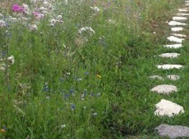 En août pensez déjà à semer les engrais verts pour avoir un beau sol cet hiver !