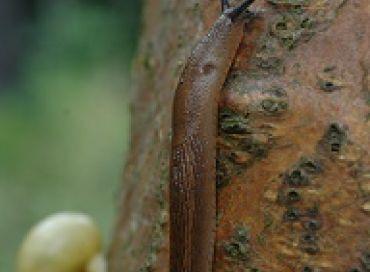 Comment avoir des plantes saines et fortes pour repousser maladies et ravageurs