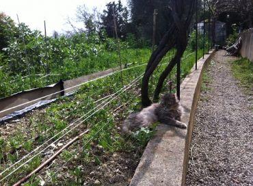 Conseils biodynamiques pour les plantations de mai au jardin for Conseil plantation jardin