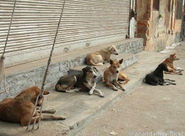 Une fillette sauvée par des chiens de rue