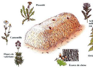 Biodynamisez votre compost