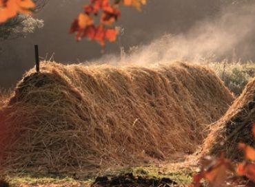 En octobre occupez-vous d'un être vivant dans votre jardin : le compost !