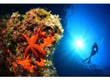 N'hésitez pas à plonger dans la rentrée au mois de septembre avec Monaco Green
