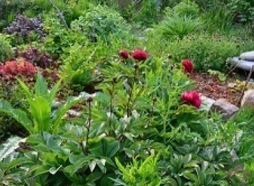 Retrouver la confiance en soi et en son jardin