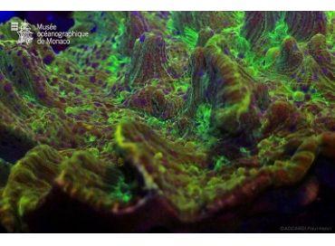 Conseils de nutrition et coraux fluorescents pour ce mois de mars