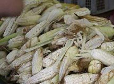 Alors les OGM ?  Dangereux pour la santé ou pas ?