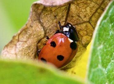 Harmoniser son jardin avec l'environnement