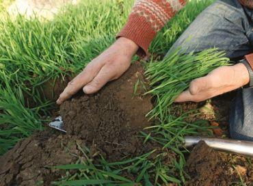 Semez des engrais verts en septembre