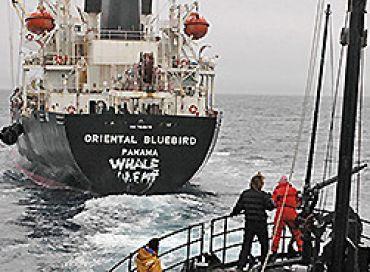 Episode 23 : La guerre des baleines