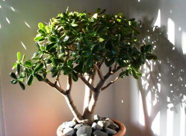 Les plantes apportent aussi leur énergie