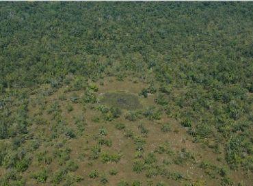 Les forêts de l'espoir