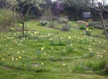 Chronique potagère : la tonte du jardin