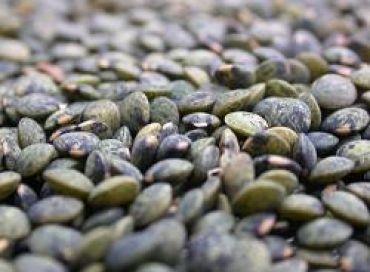 Eco Sapiens : Faut-il se méfier des graines germées ?