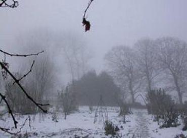 L'hivernage des plantes