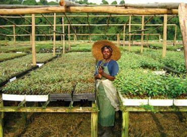 Le jardin botanique du bassin du Congo