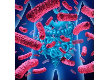 Le microbiote, notre meilleur ami