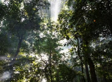 Monaco s'engage contre la déforestation