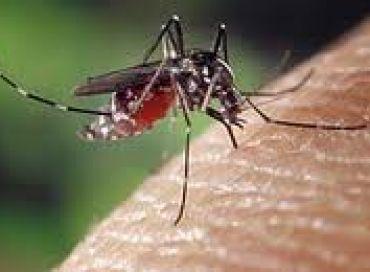 Un anti-moustique écologique