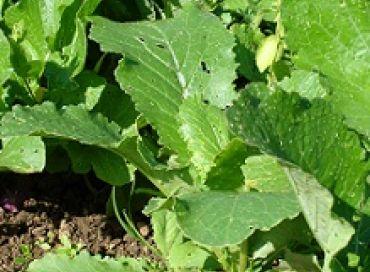 Plantations d'arrière saison et engrais verts, le jardinier a encore du boulot au jardin en septembre