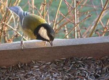 Les petits oiseaux sont les amis du bon jardinier