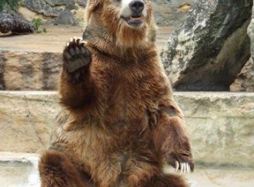 L'ours un animal mythique