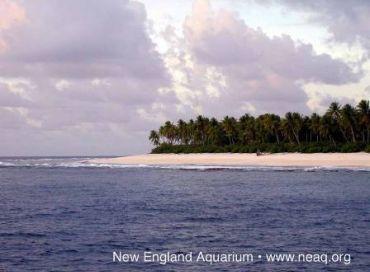 Protéger les îles Phoenix pour comprendre les changements climatiques