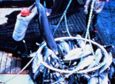 Episode 7 : l'actualité de Sea shepherd à la fin des années 80