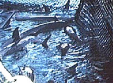 Episode 8 Sea Shepherd en 1990