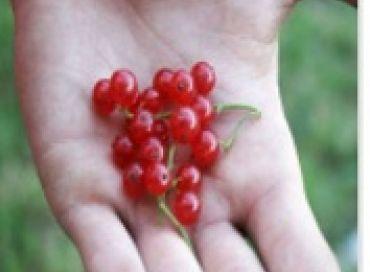 L'art de semer ni trop ni trop peu