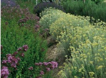 L'intérêt des plantes aromatiques