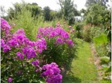 Les chroniques potagères :  les jolies bandes fleuries !