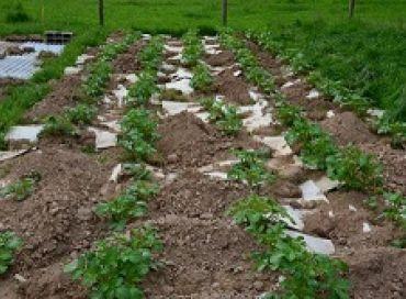 La création d'un jardin vivrier ou le potager de Stéphane