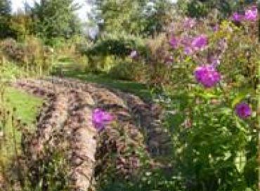 Les chroniques potagères : semer pour l'hiver