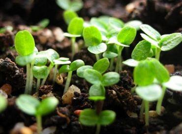 En mars ça repart pour les semis !