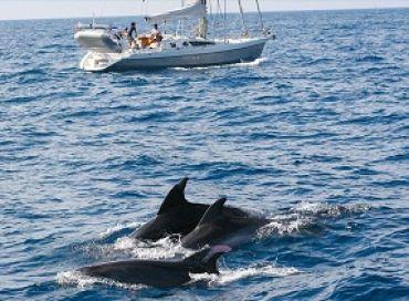 Sauvez baleines et dauphins avec la Swiss Cetacean Society