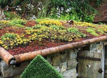 Vive les toitures végétalisées