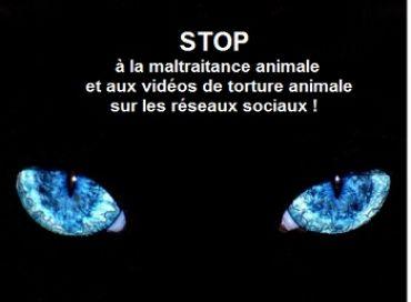 Halte à la torture animale et à la barbarie sur les animaux !