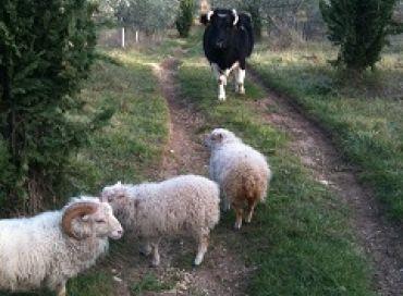 La culture biodynamique aime les animaux