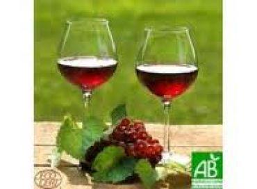 Eco Sapiens : le vin bio