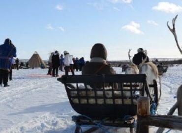L'élevage de rennes en Arctique