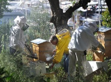 L'abeille, sentinelle de l'environnement à Monaco